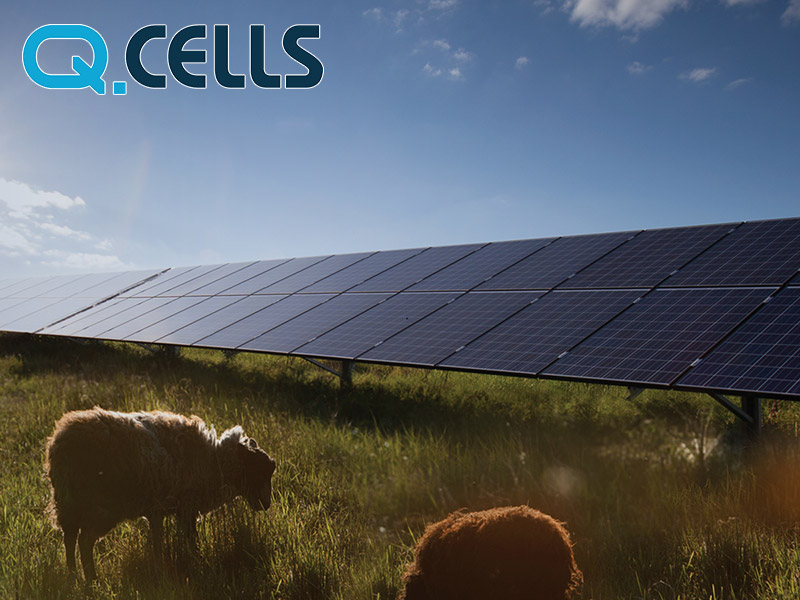 Hanwha Q Cells solar panels expert review. Are they the best solar panels to buy for your home?